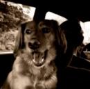 Animali in macchina: un italiano su 4 li porta in auto